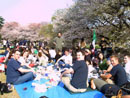 Cherry Bloosom Party 04